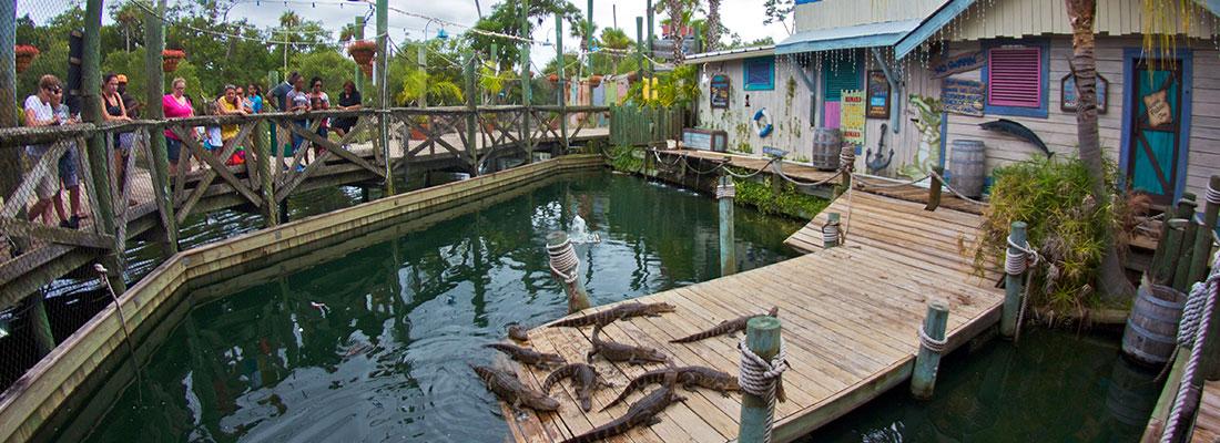 Gator Feeding | Adventure Landing & Shipwreck Island Water Park | Jacksonville Beach, FL